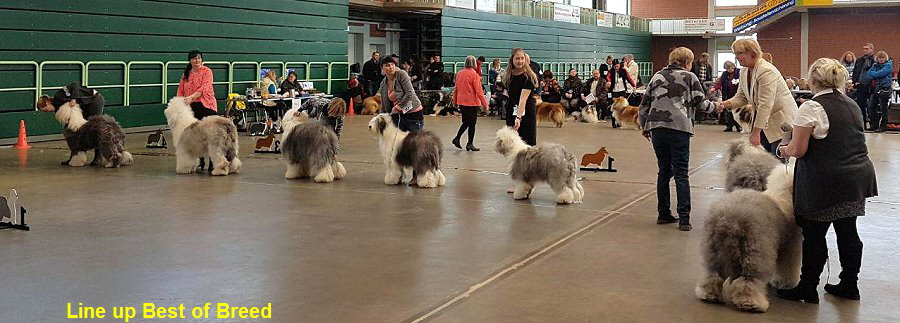 Line up Best of Breed