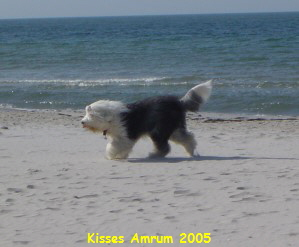 Kisses Amrum 2005