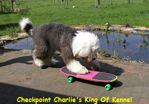 Checkpoint Charlie's King Of Kennel