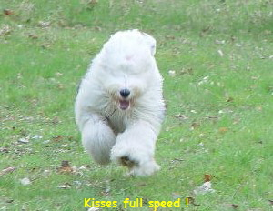 Kisses full speed